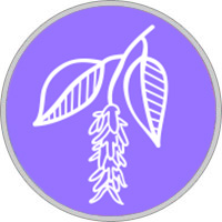 horoscopo druida Signo carpe