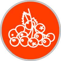 horoscopo druida Signo serbal